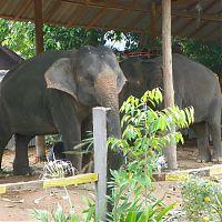 Слоновья ферма, Ко Чанг