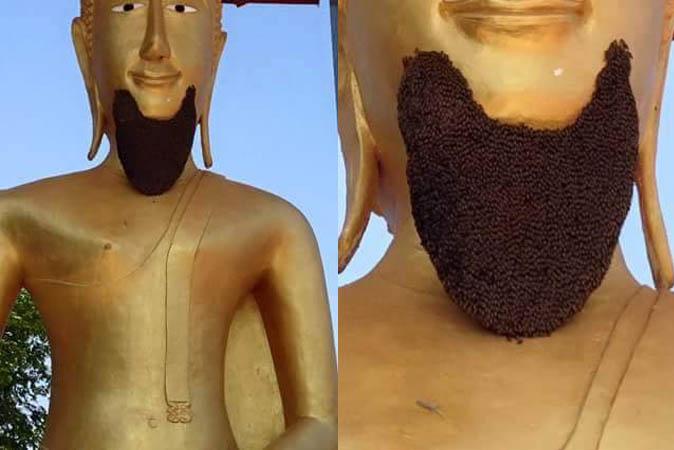 Пчелиная борода Будды