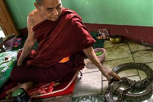 Монах гладит змею в пагоде в пагоде Баундойоук