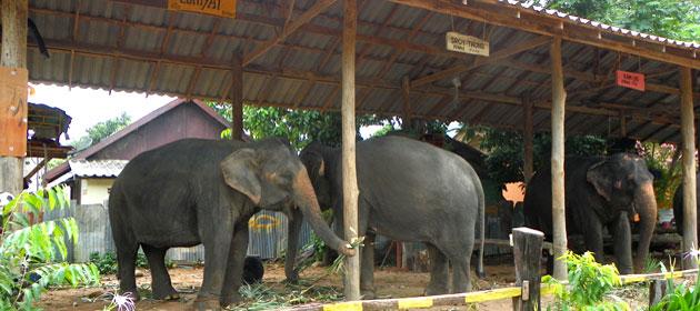 Райский уголок в Таиланде: Ко Чанг - остров слонов