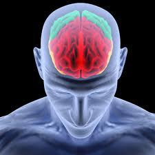 Мозг и медитация